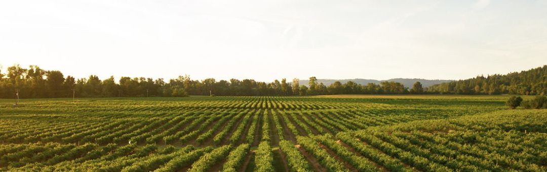 MBEP Member Spotlight: Lakeside Organic Gardens Embraces Opportunities to Invest in the Region